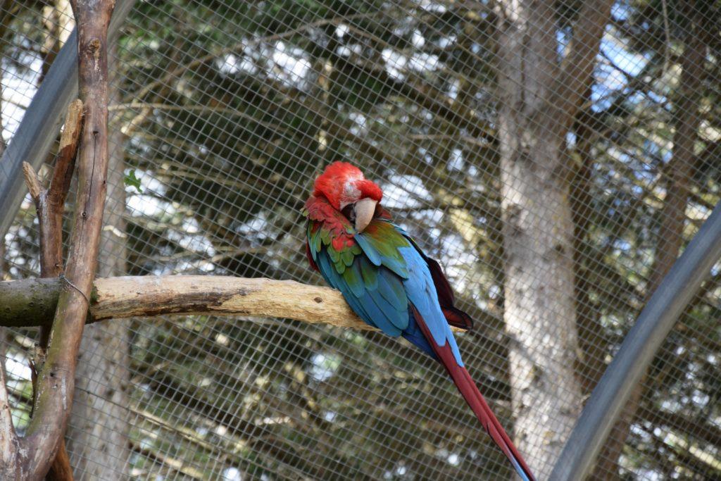 Sortie Tropical Parc